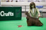Texas at Crufts 2020